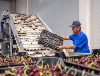 Hamarosan hűtőház segíti a Szécsény környéki gyümölcstermelőket